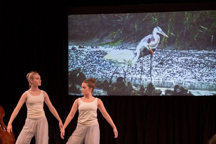 Two performers of the Salt Marsh Suite dance on stage at the ACCelerate Festival.