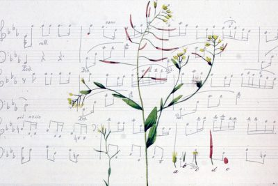 An image of a plant superimposed over musical notation