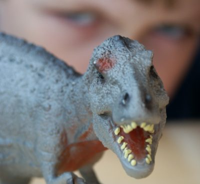 A child looks at a toy dinosaur